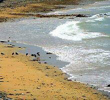Birds On An Irish Beach by Fara