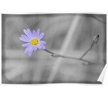 Late Purple Aster in Selective Color Poster