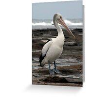 pelican stroll Greeting Card