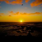 Pacific Sunset by AmishElectricCo