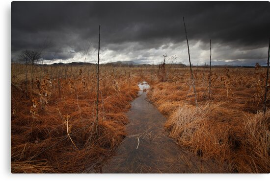 Red Sea by Bob Larson