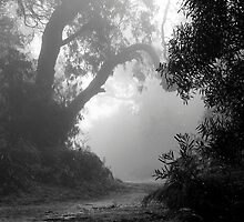 Foggy Path by sandralee1989