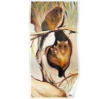 Bush Tail Possums Poster