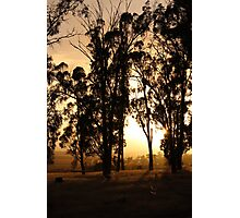 dawn paddock light - shining Photographic Print