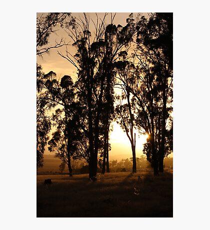 dawn paddock light - shining Photographic Print