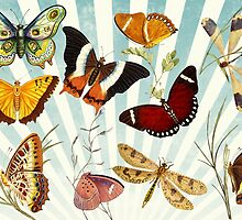 Vintage Butterfly poster by franceslewis
