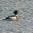 Merganser by VoluntaryRanger