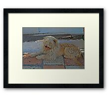 Two Tone Dog Framed Print