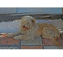 Two Tone Dog Photographic Print