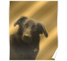 Cute Black Lab Mix Dog Face Poster