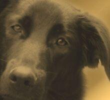Cute Black Lab Mix Dog Face Sticker