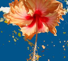 Happy Hibiscus by Sally Squirrell