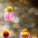 Floral Dance by Margi