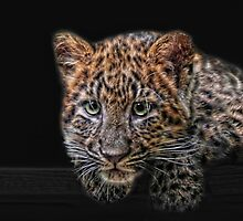 leopard kitten by Jo-PinX