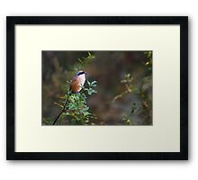 The china birds - pd Framed Print