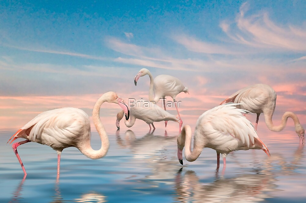 Flamingo Lagoon by Tarrby
