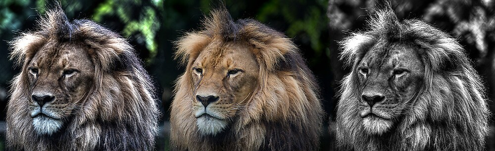 Mujambi the King by aussie-visions