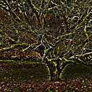 hdr tree by murch22