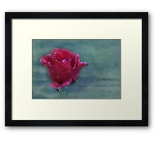 there is no such thing as an ordinary rose... Framed Print