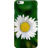 Single daisy with green background iPhone Case/Skin
