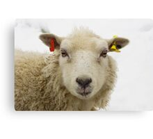 Lamb In The Snow Canvas Print