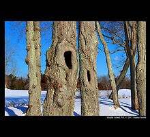 Tree Hollows by © Sophie W. Smith
