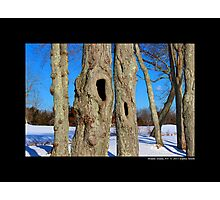 Tree Hollows Photographic Print