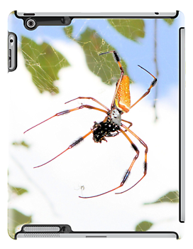 Golden Silk Orb Weaver by ©Dawne M. Dunton