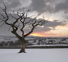 Sunrise With The Tree by Brian Kerr