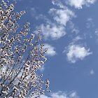 Blossom by volkandalyan
