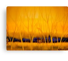January Day.. Canvas Print