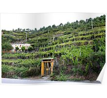 Vineyards of Cinque Terre Poster