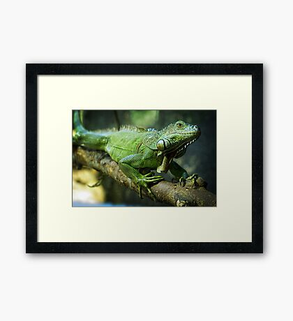 Green Iguana Framed Print