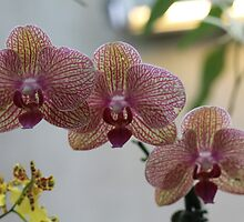 What a beautiful flower by arlingtonpup