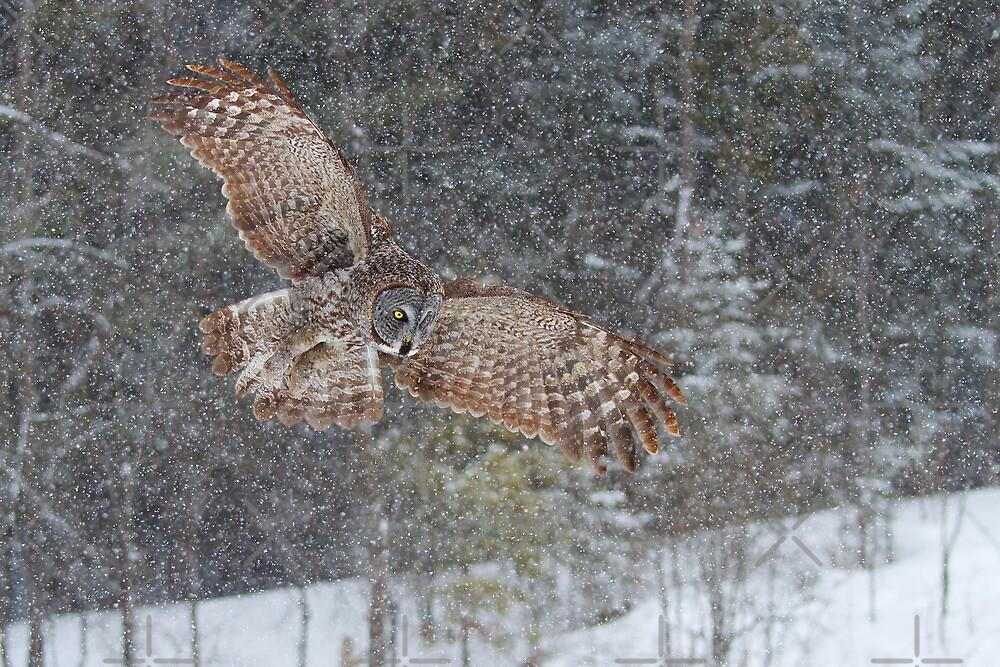 Through the Snow by Jim Cumming