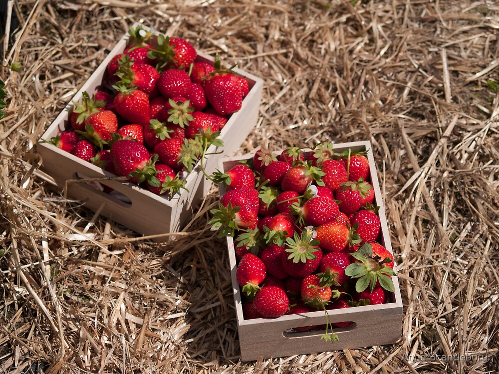 boxes of strawberries by Anne Scantlebury