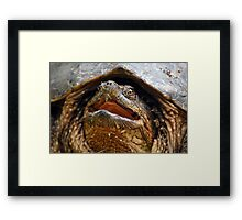 Song Of The Snapper Framed Print