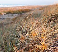 sand dunes 3 by Anne Scantlebury