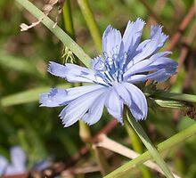 blue flower by Anne Scantlebury