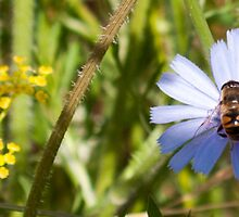 blue flower and bee by Anne Scantlebury