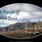 Dead tree devastation near Johnston's Ridge, oval by Dawna Morton