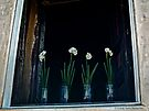 Flowers in Window by Lucinda Walter