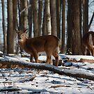 Deer by Agood