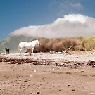 horses on the beach 2 by Anne Scantlebury