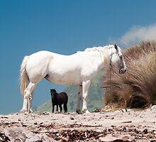black and white horse 2 by Anne Scantlebury