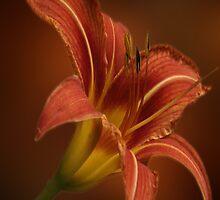 Orange Lilly by WishesandWhims