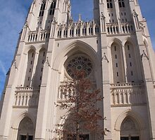 Washington DC,Cathedral by Kirk D. Belmont Photography