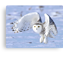 Her power takes flight Canvas Print