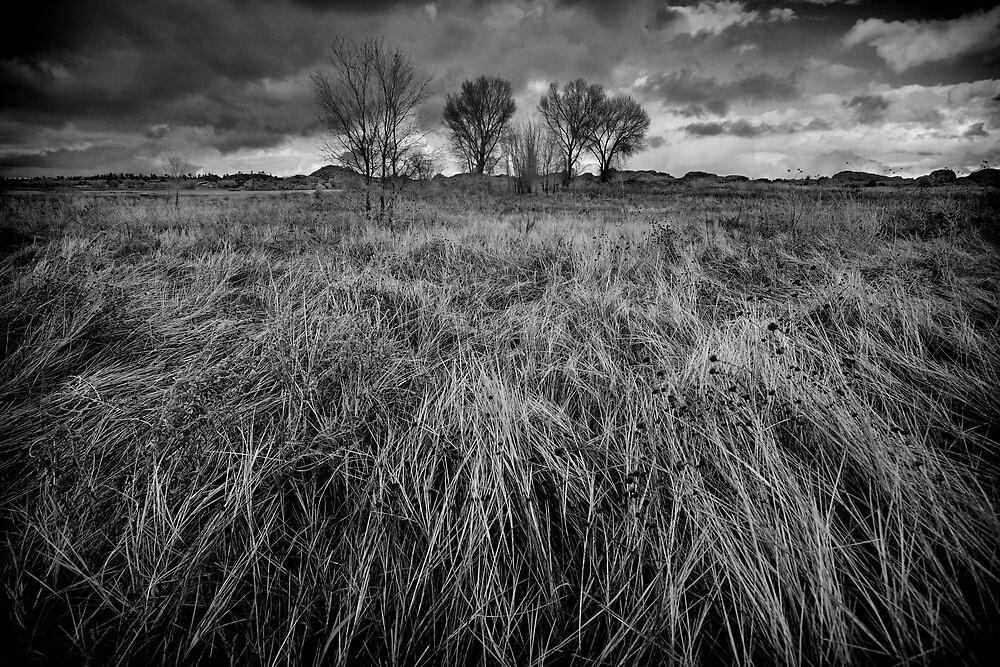 Winter Sweep by Bob Larson