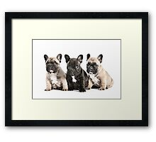 Puppy Pals  Framed Print